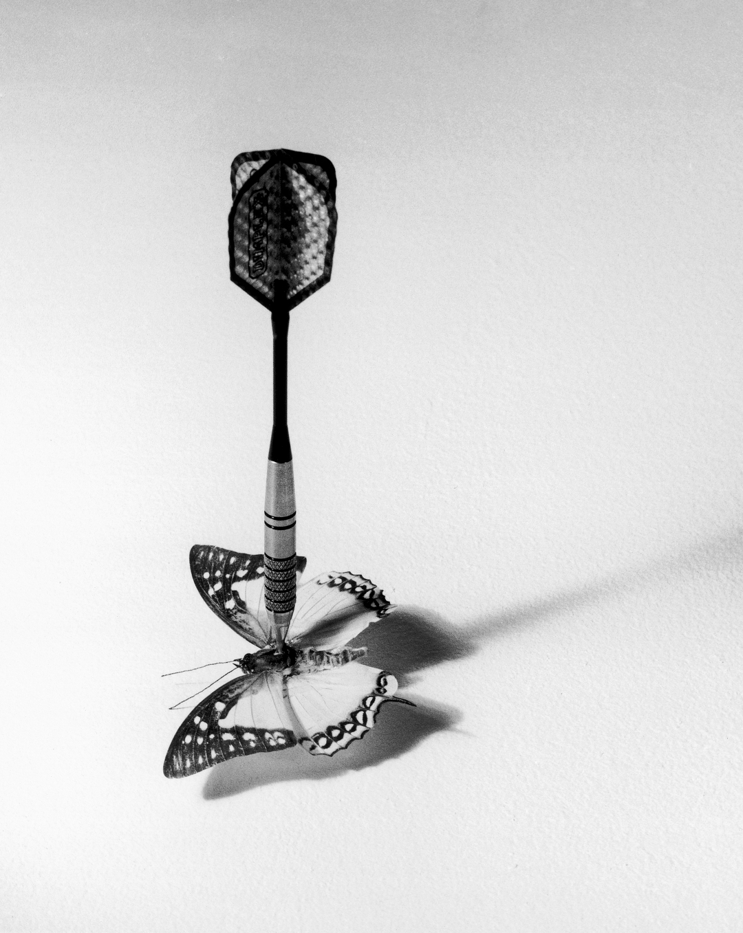 chema madoz butterfly